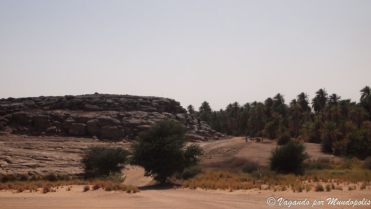 sabu-jaddi-sudan
