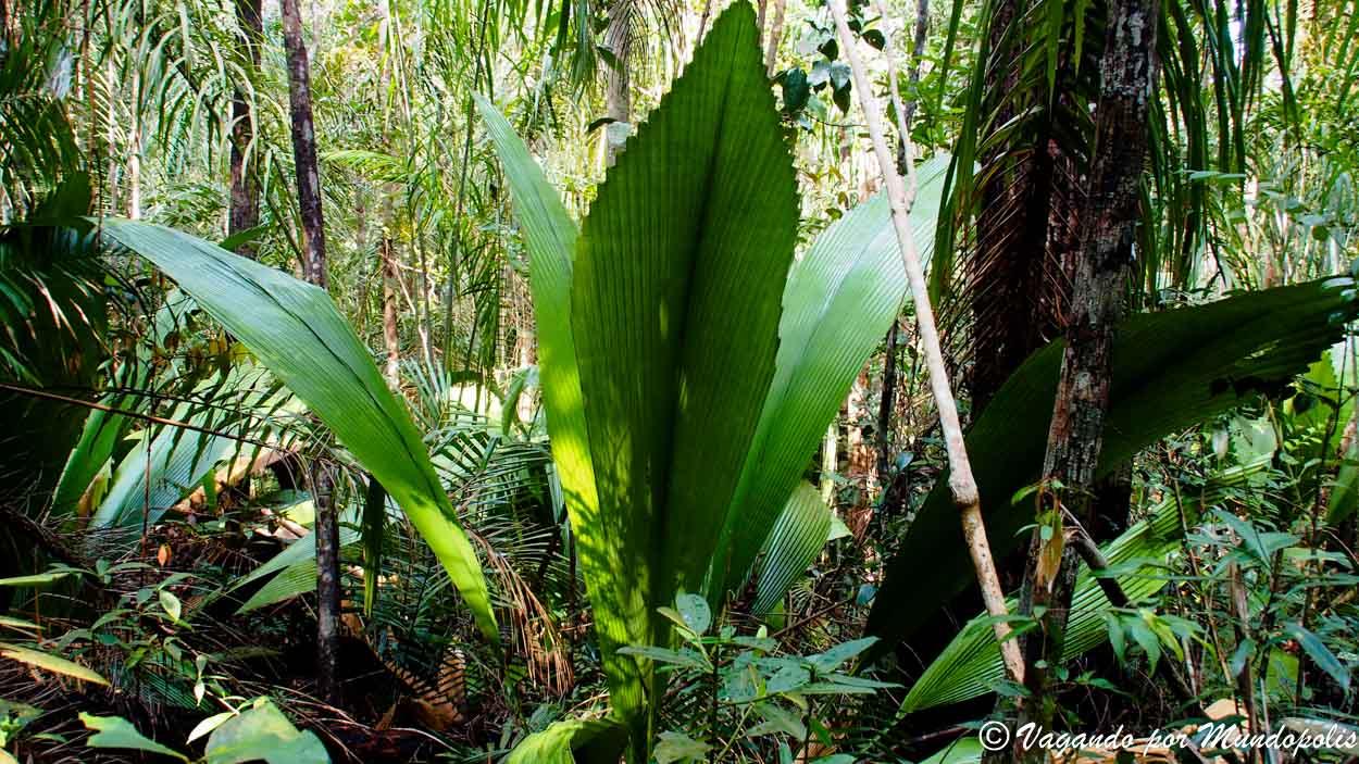parque-nacional-de-bako-malasia