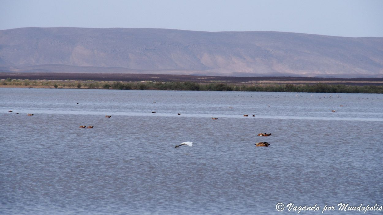 lago-flamencos-merzouga