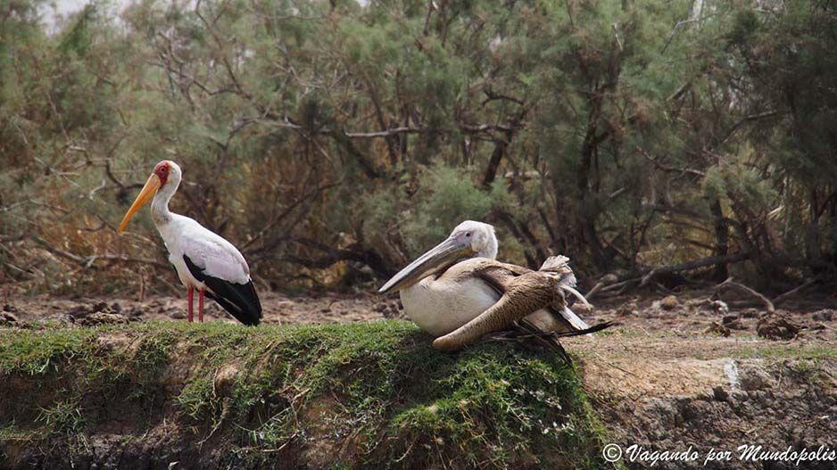 parque-nacional-djoudj-senegal