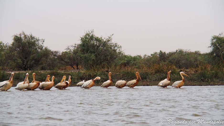 Parc-National-des-Oiseaux-du Djoudj