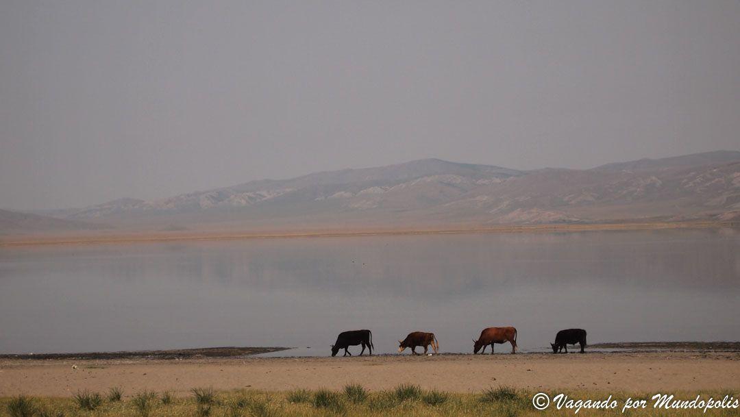 Erkhe-Lake-mongolia