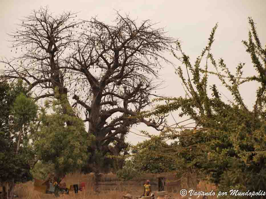 baobab-burkina-faso