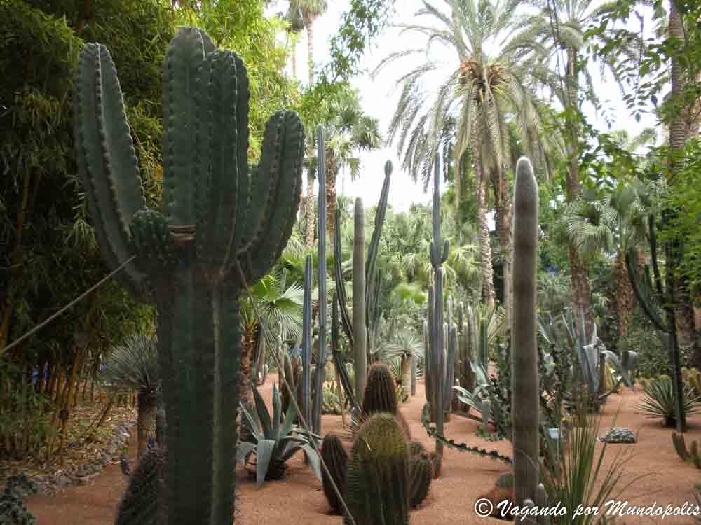 que-hacer-en-marrakech-jardines-majorelle