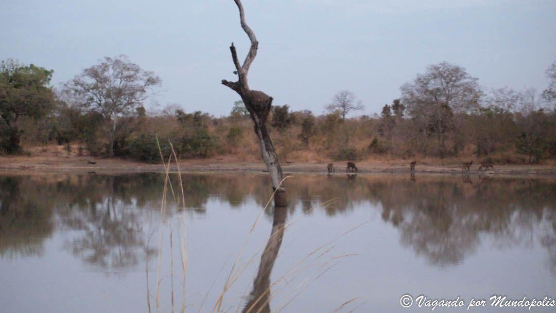 parque-nacional-nazinga