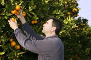 Curso Fruticultura - Onde fazer