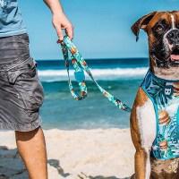 Correas y collares originales para nuestros perros