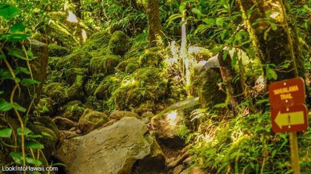 Aihualama Trail
