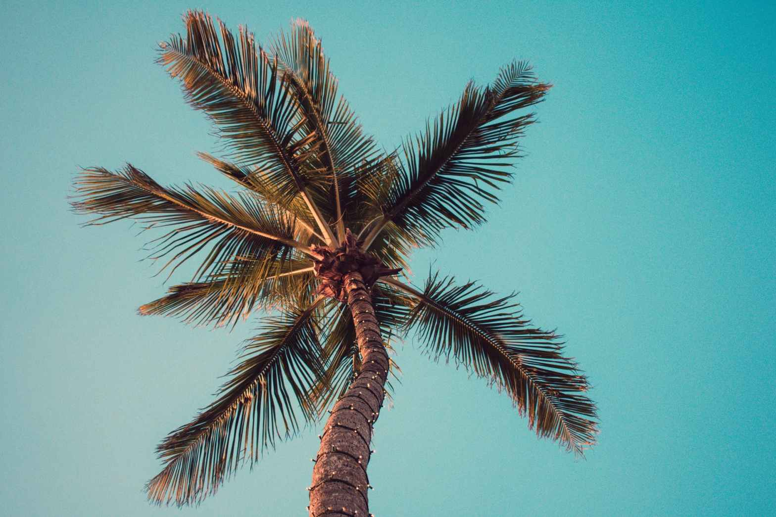 low angle photography of coconut tree