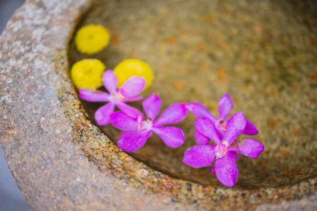 granite pot with water with violet orchid and yellow flowers