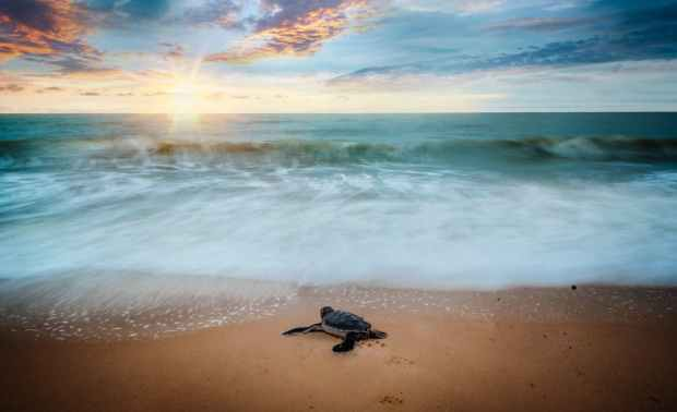 scenic view of ocean during dusk with a turtle on the shore