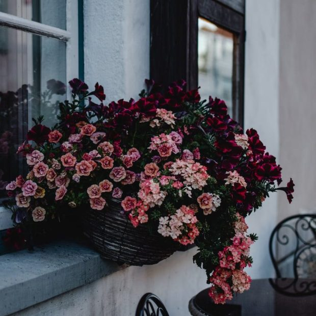 red and pink flowers on a basket hanging from the window sill with a black table and chair in the background
