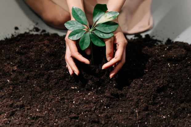 A woman putting a plant in the soil. An example of how composting can be used for gardening.
