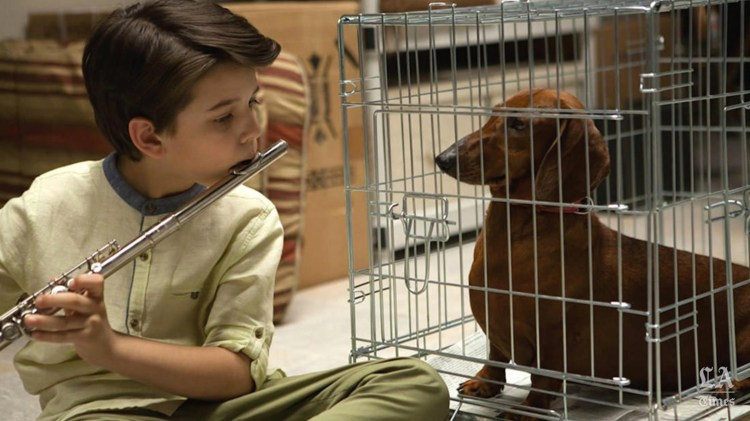 wiener-dog-movie-one