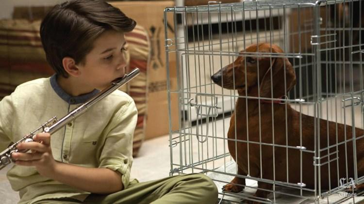 wiener-dog-movie-one