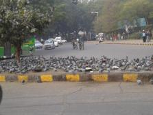 weekly photo challenge: pigeon feeding