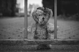 teddy bear behind bars