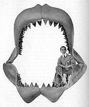 carcharodon-megalodon