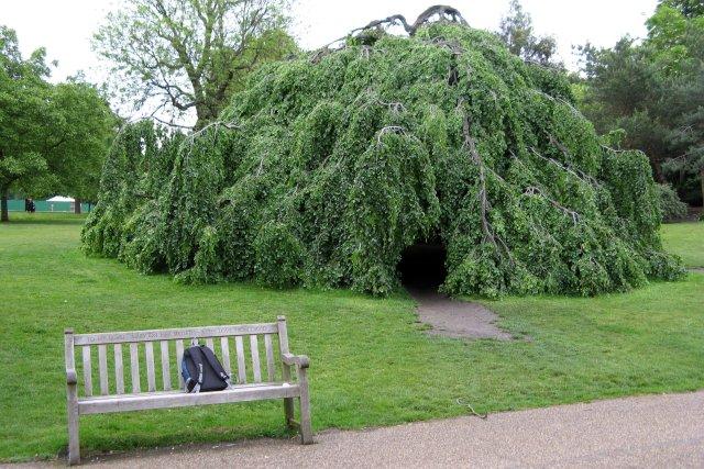 a walk @ Hyde park