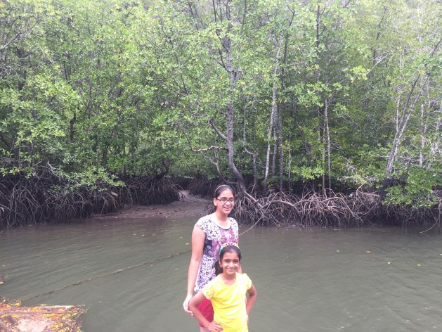 Best Mangroves forest