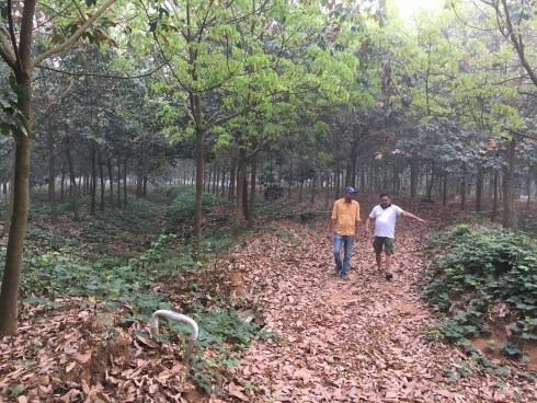 Best homestays near Malnad