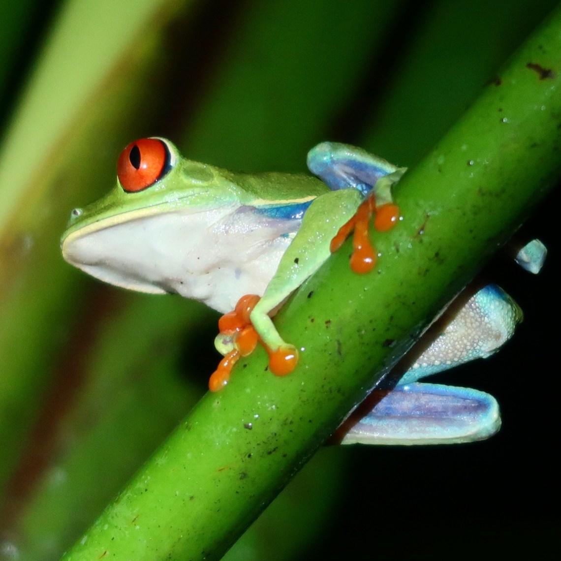 vakantaseren, Costa Rica, Edventure Reizen
