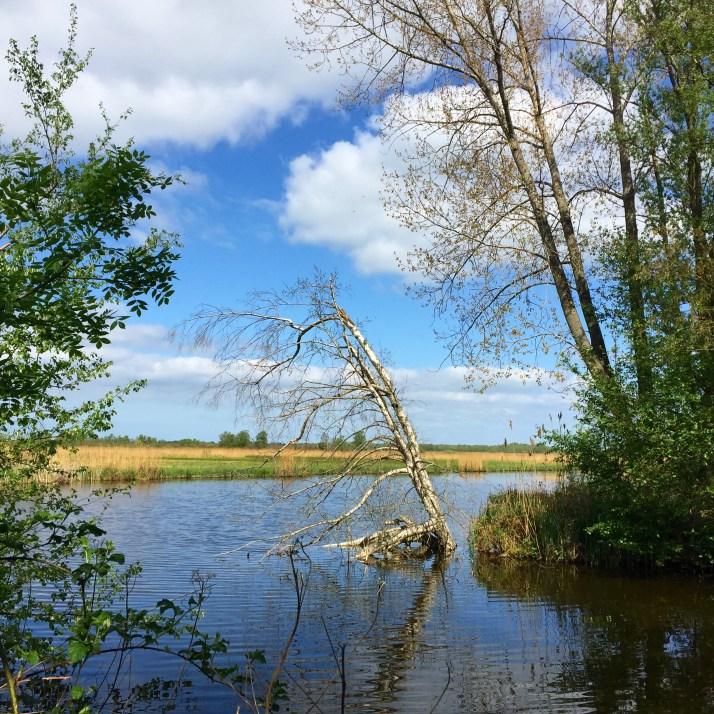 Nieuwkoopse plassen, wandeling, Lusthof de Haeck