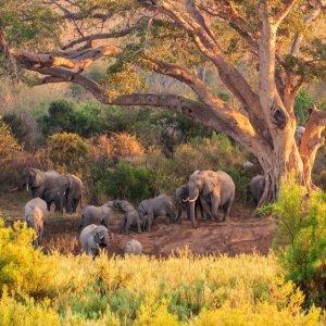 Rondreis Relaxed Zuid-Afrika exclusief vlucht