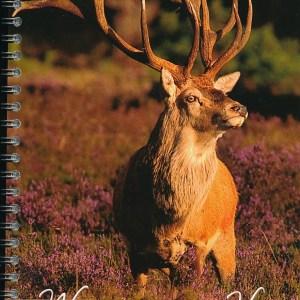 Natuurgids Atlas van Wildobservatieplaatsen op de Veluwe | Vereniging het Edelhert