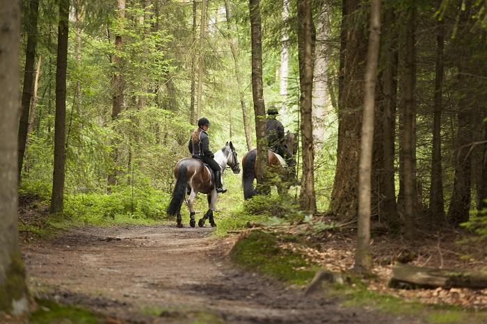 Paardrijden in het bos