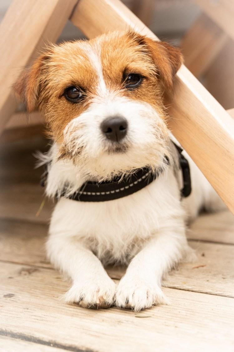honden La Comté