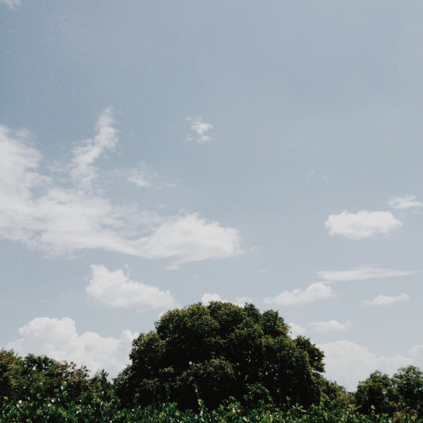 Sky #vscocam