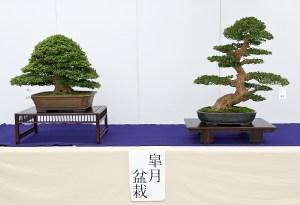 7 SATSUKI FINALISTS