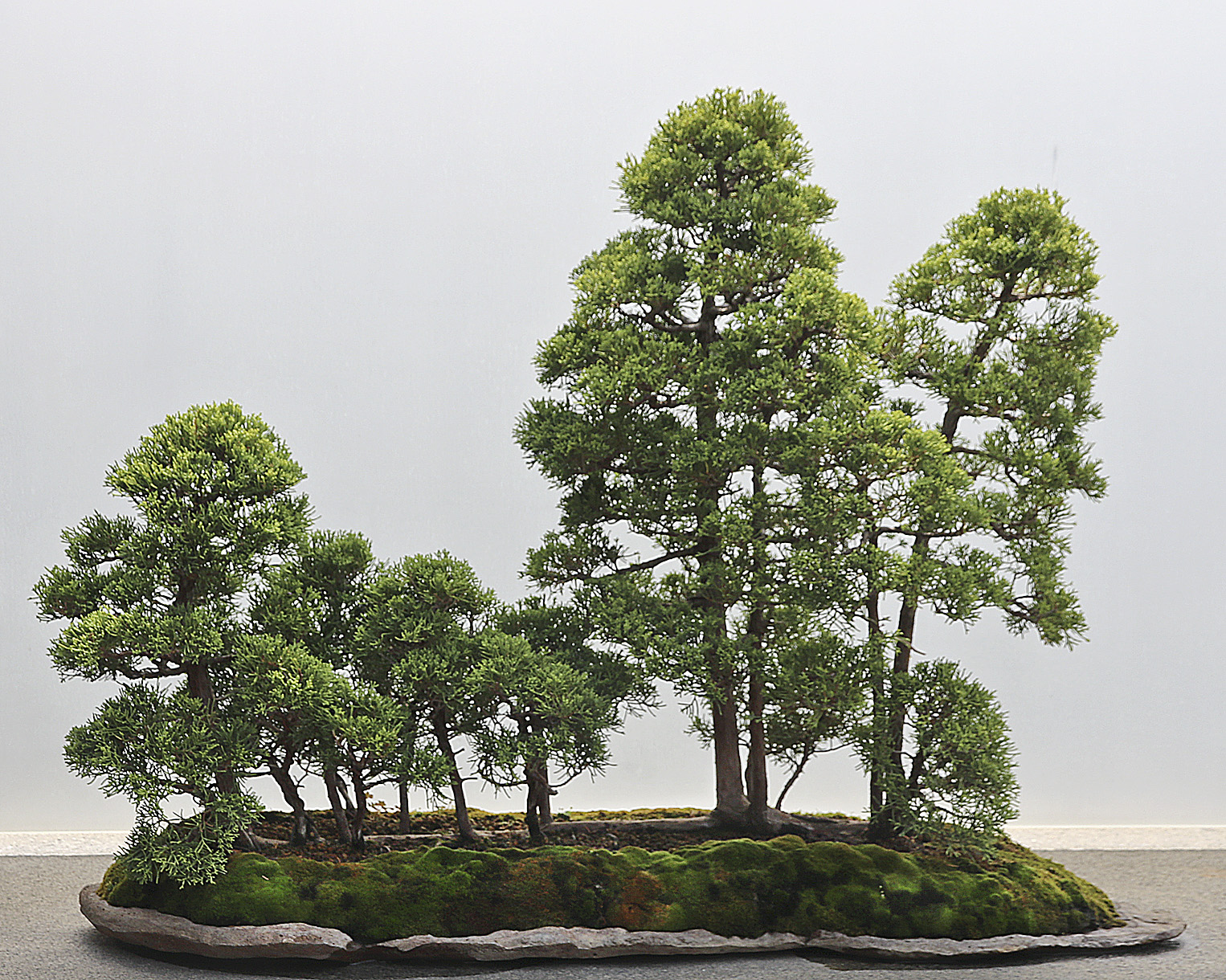 2015 38th Mid America Bonsai Exhibit Valavanis Bonsai Blog