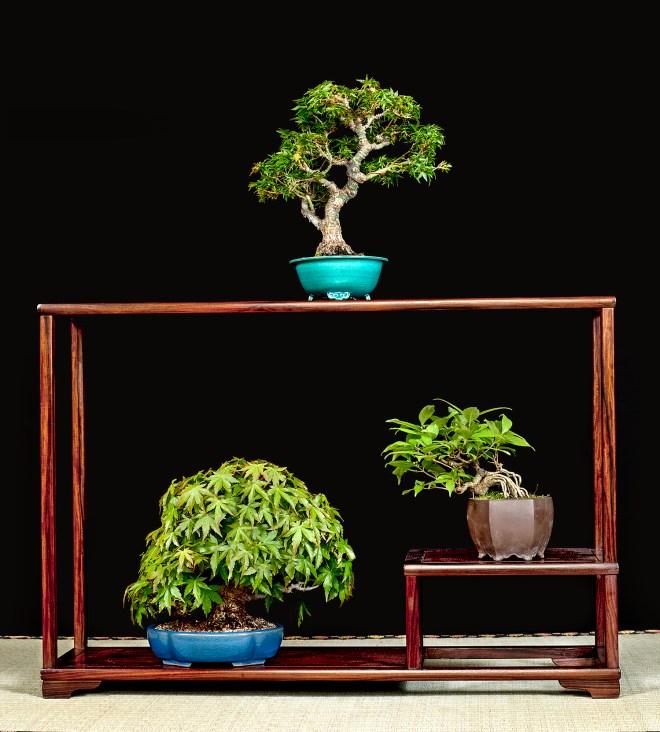 TREE NO. 41 1