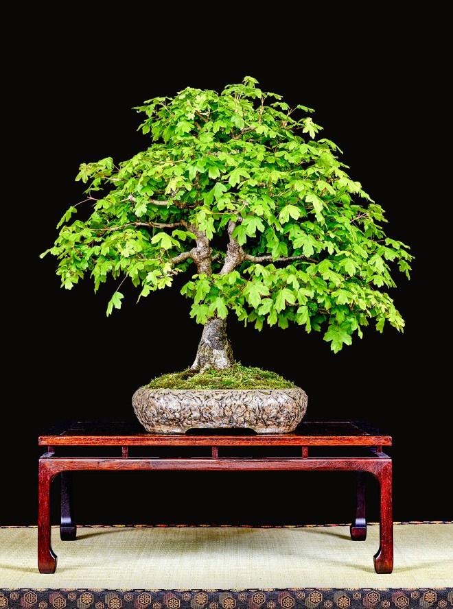 TREE 19-4791