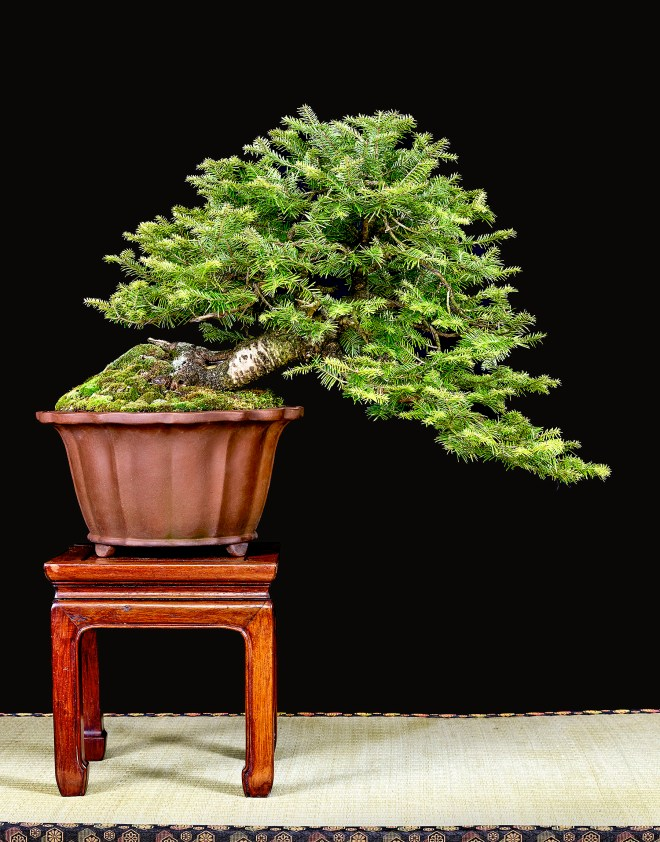 TREE 20-4792