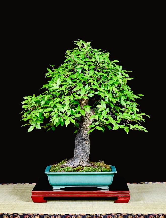 TREE 22-4795