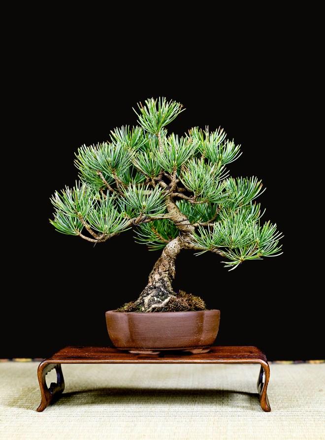 TREE 54-4914