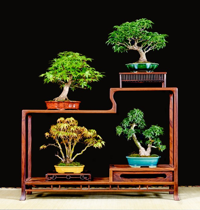 TREE 60-4931
