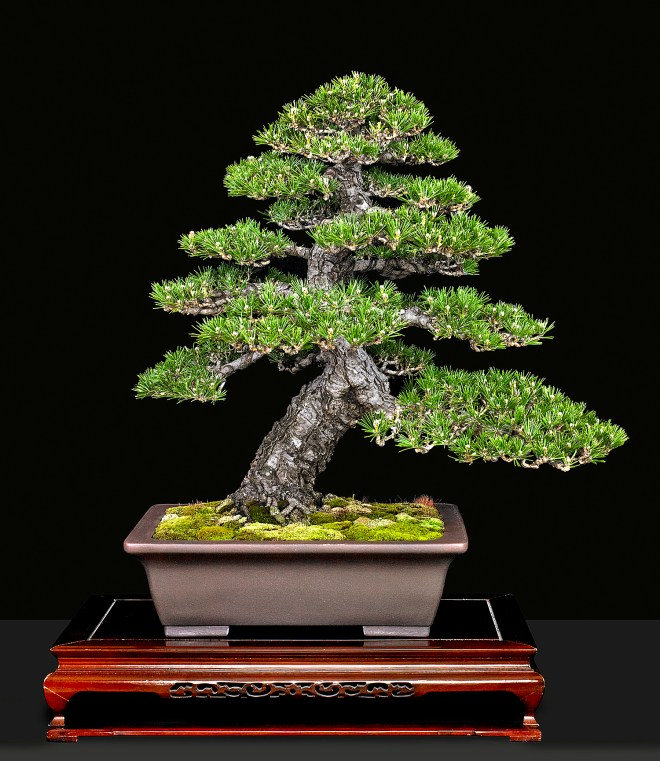 Meet Bob Blankfield Valavanis Bonsai Blog