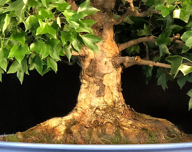 LARGE TRIDENT ROOTS