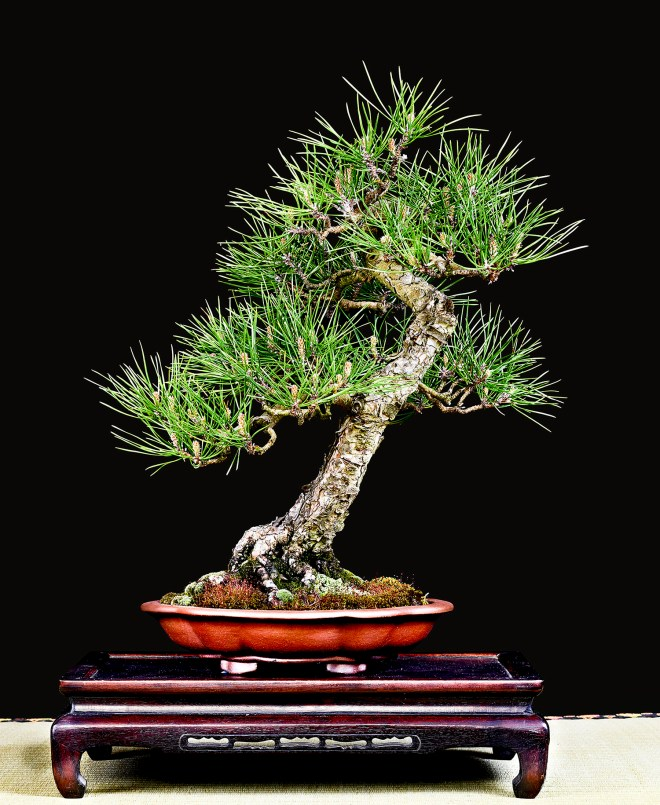 TREE 39-4861.JPG