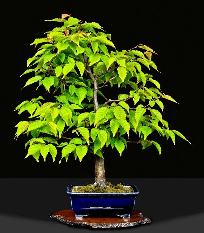 TREE 6640312.JPG