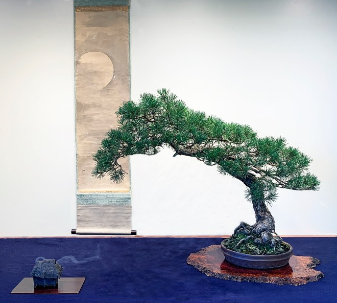 SCOTS PINE DISPLAY.JPG