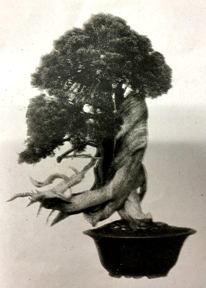 JUNIPER EARLY 1940s.JPG