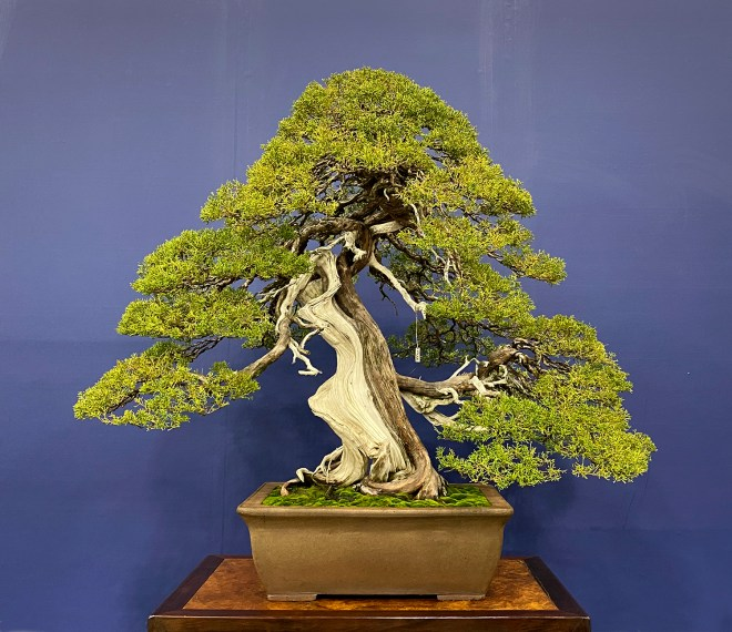January 2020 Valavanis Bonsai Blog