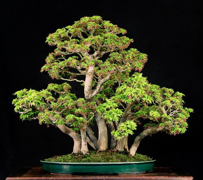 SHISHIGASIRA FOREST