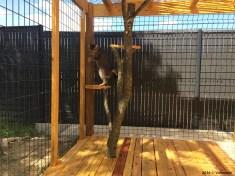 Jade teste l'enclos extérieur aménagé