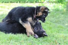 Roxana et Rex